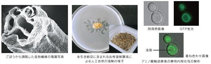 photo212.jpg